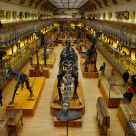 museo de historia natural de paris