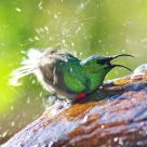 happy sunbird