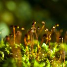 deep forest in the moss...