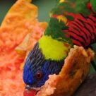 Hungry Parrot