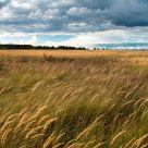 Windy landscape