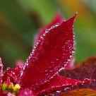 Dewdrops Aplenty