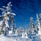 Sunny day in Lapland