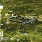 The Frog And The Flower