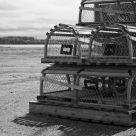 Empty Traps