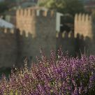 Flowers and ramparts