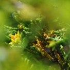 Shy flower..