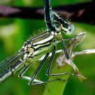 Love amongst dragonflies