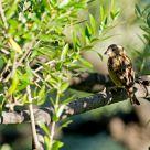 Un oiseau sur la branche...