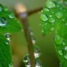 reflection drops