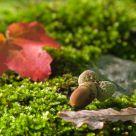 Envie d'automne