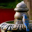 Blue Bird on Fountain