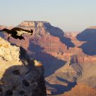 Condor leaping at Mather Point, Grand Canyon South Rim
