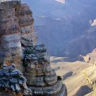 Condor on rock, Mather Point, Grand Canyon South Rim