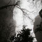 zhang jiangjie in fog