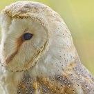 OWL 7636