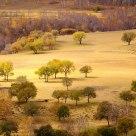 Hamaba's Trees
