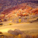 Hamaba's Golden Autumn