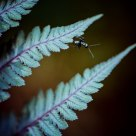 Ant and Fern