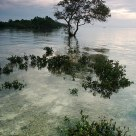 Moorning Mangroves