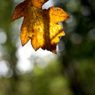Autumn's bokeh