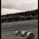 Field - Tuscany