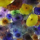 Dale Chihuly's glass flowers at the Bellagio