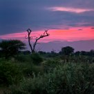 Sunset at Makanyane