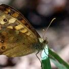 butterfly look