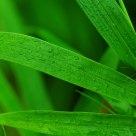 清凉的绿色。。。