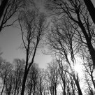 Naked Trees in Aarhus