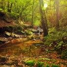 The autumns colors