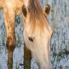 Peaceful Horse