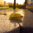 Feuille sur un banc