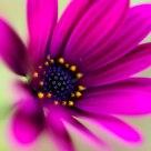 Una suave flor / A gentle flower