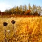 Autum Grass