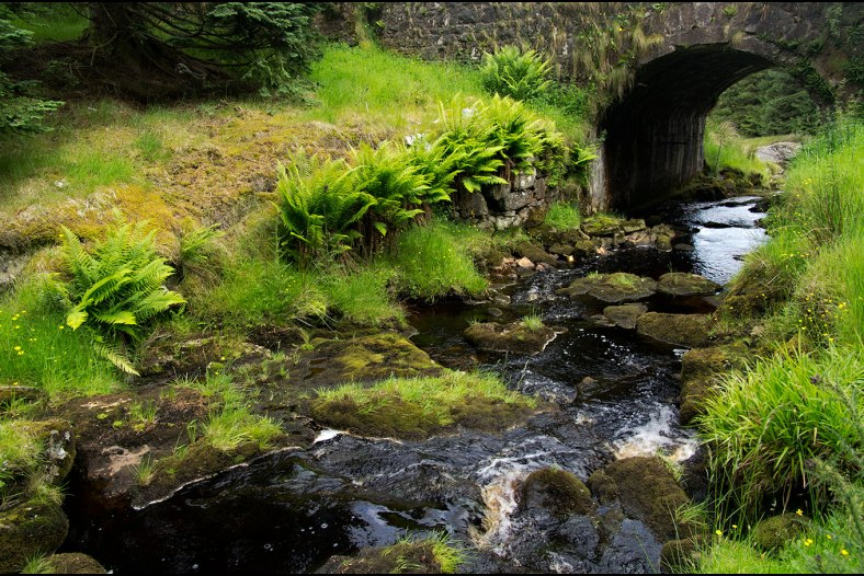 Stream and Stone Bridge, County Antrim, Northern Ireland