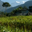 Himalayan Rice Fields