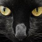 Susi the cat