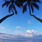 Pair of Coconut Trees