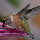 2010 The Hummingbird