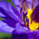 Tiny Pollinator