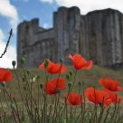 Poppies at Maillezais Abbey