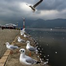 Gulls in Winter