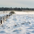 Very frosty weekend in the Bialowieza Forest