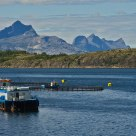 Fish farming in northern Norway