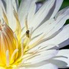 Tiny Pollenator
