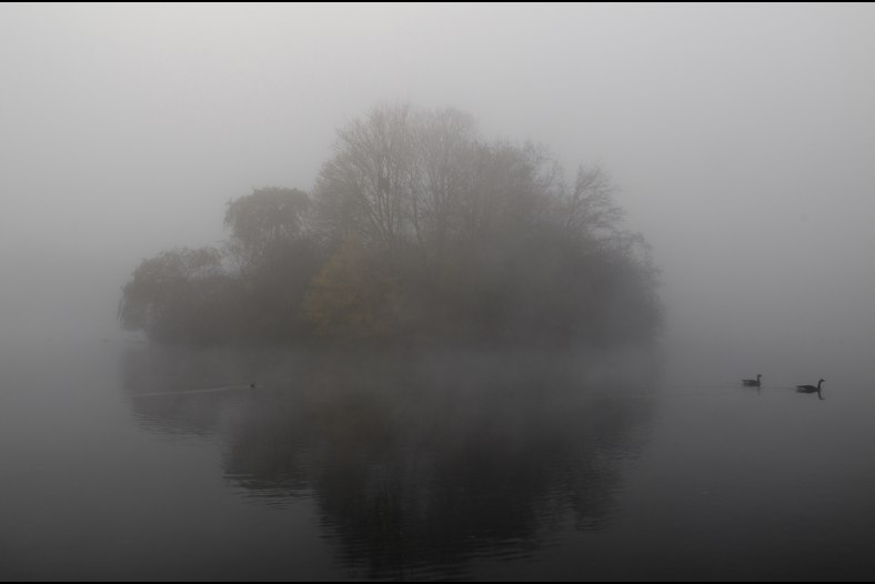 foggy island of herons