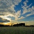 Evening sky over me...