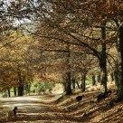 Cruzando el otoño